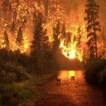 nature and destruction